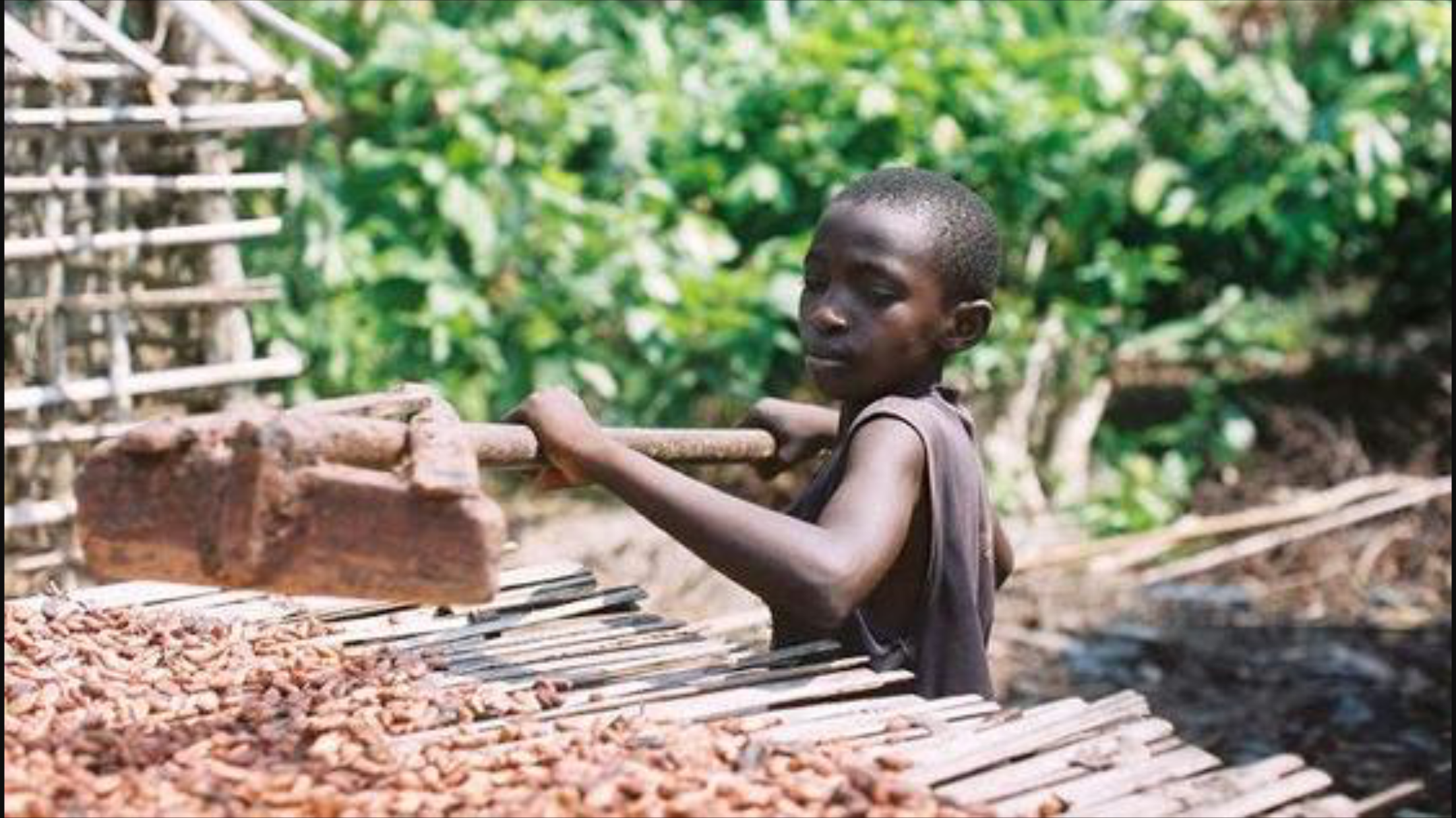 slavery in the chocolate factory The guardian of 19 children freed from slavery by the ivorian  while fowler's  chocolate condemns child slavery, it continues to use ivory coast  at the  foxconn factory in china, where electronics are manufactured, (ie.